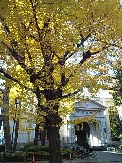 紅葉の深川図書館